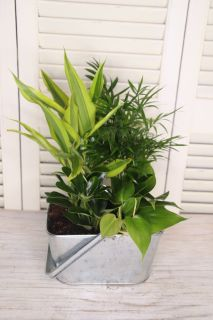 Tin green planter